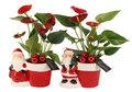 Kerst-arrangement()