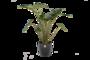 Alocasia Zebrina met Elho sierpot(Alocasia Zebrina)_2
